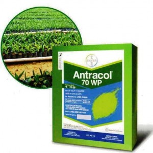 ANTRACOL (T)