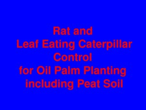 thumbnail of Rat & Leaf Eating Caterpillar Control
