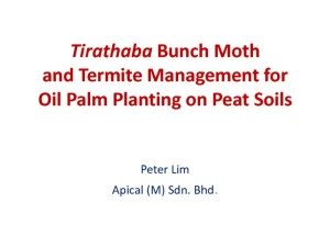 thumbnail of Tirathaba Bunch Moth and Termite Management for Oil Palm Planting on Peat Soils
