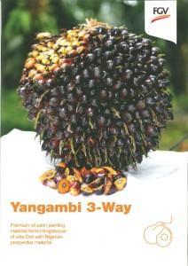 thumbnail of YANGAMBI 3-WAY