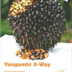thumbnail of YANGAMBI 3-WAY